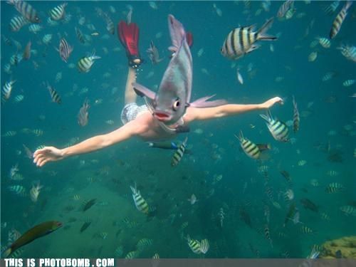 epic,fishbomb,merman,photobomb,placement