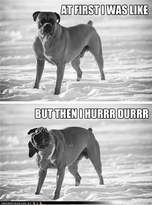 after at first i was like before boxer but then i derp hurr durr shakeface snow