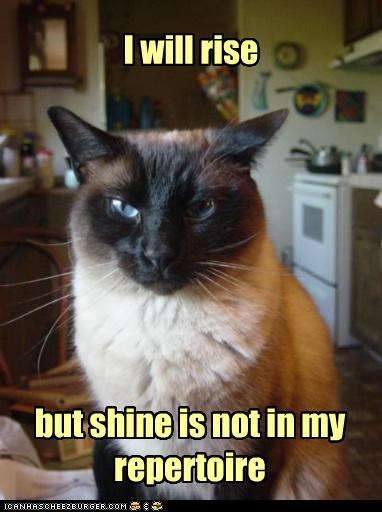 agreement caption captioned cat Hall of Fame repertoire rise rise and shine shine siamese statement