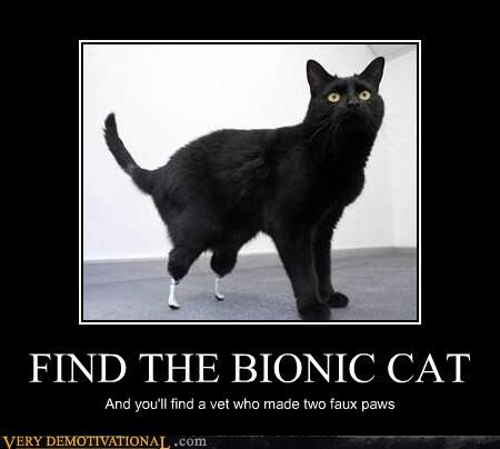 FIND THE BIONIC CAT And you'll find a vet who made two faux paws