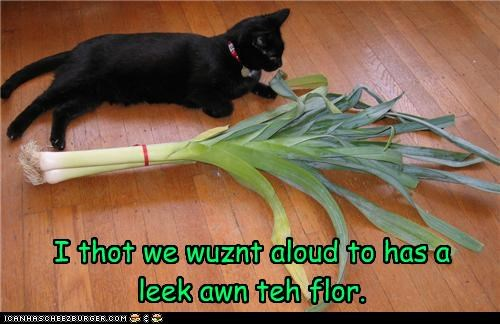 caption,captioned,cat,confused,double meaning,floor,leak,leek,literalism,not allowed,pun