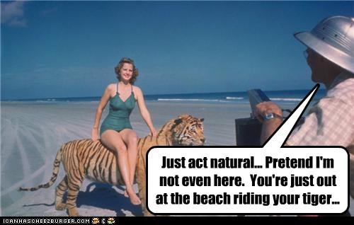 animal funny lady Photo photograph sexy tiger - 4235373568