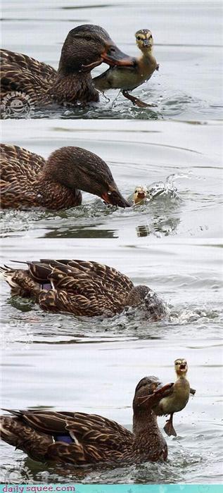 cute duck dunk - 4235669760