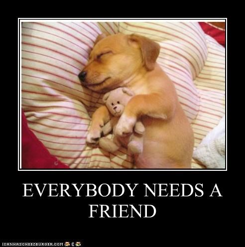 cuddling everybody friend friendship Hall of Fame labrador need puppy sleeping stuffed animal teddy bear - 4235791872