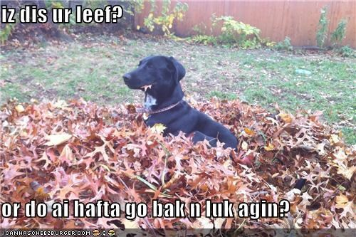 autumn,critters,dogs,fall,leaf,pile
