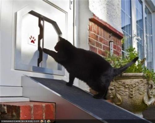 cat door conveyor belt fat news technology weird wtf - 4236879616