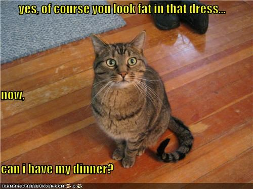 affirmation,appearance,caption,captioned,cat,dinner,dress,fat,impatient,now,of course,question,yes