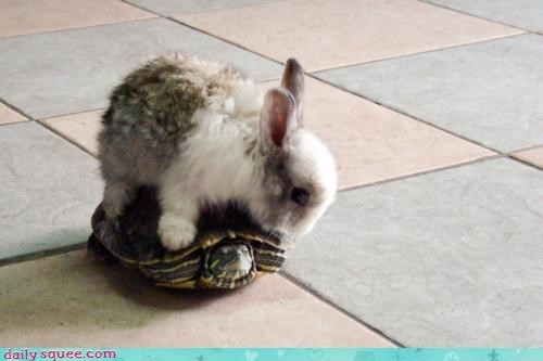 acting like animals bunny floor game IRL lava rabbit tortoise and hair turtle