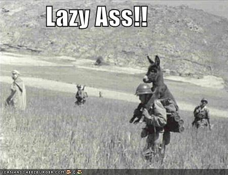 animals funny Photo photograph soldier war wtf - 4237238272