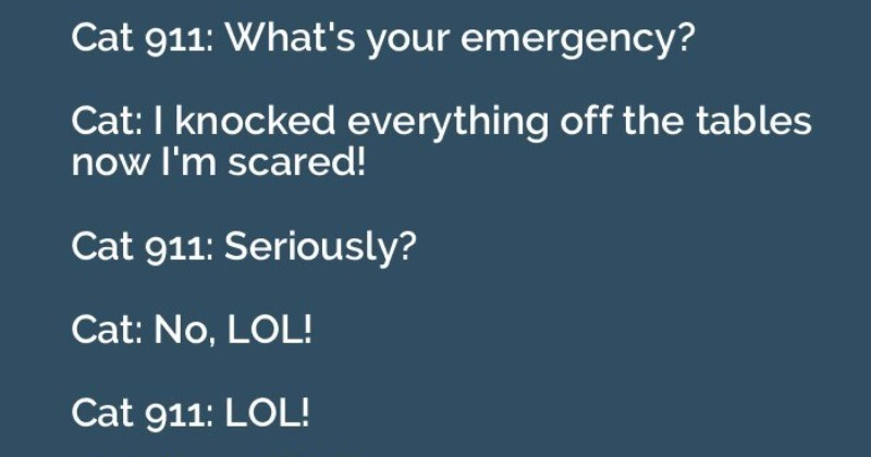 funny 911 calls by animals