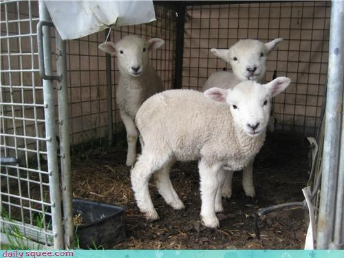 little bow peep sheep lamb squee - 4237892096