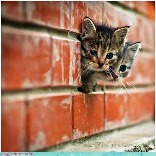 baby cat cute ears kitten - 4238525952