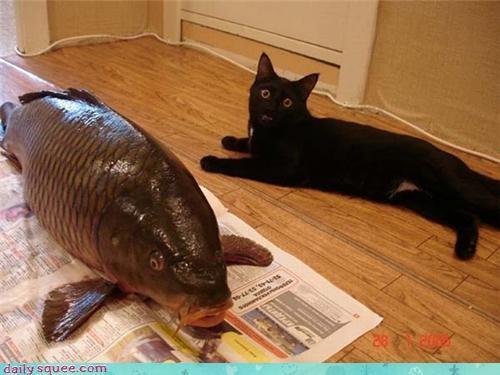 cat food kitten nom - 4238855424