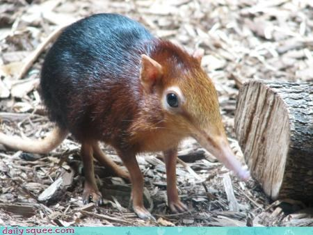 cute elephant shrew shrew weirdo whatsit