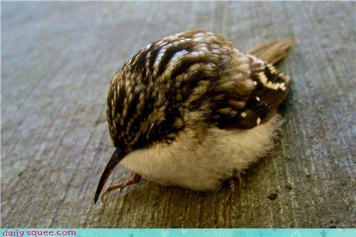 baby bird cute sphere tiny - 4238950400