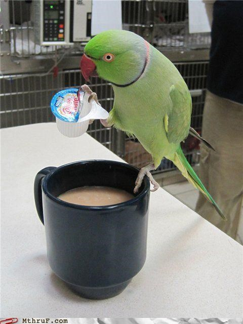 coffee,creamer,mug,parakeet,personification