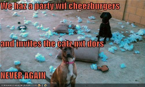 Cheezburger Image 4239824384
