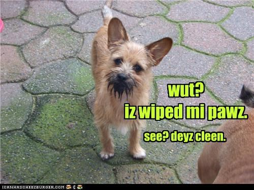 clean dirty face ignorance mud paws proof what whatbreed - 4239955456