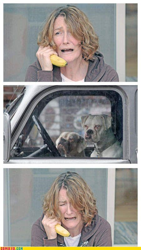 animals banana phone but then i dogs lol wtf - 4240064512