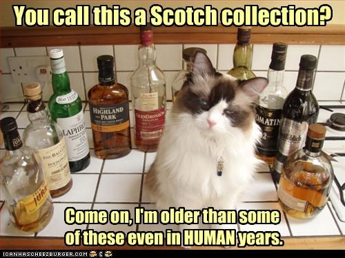 age,caption,captioned,cat,collection,comparison,displeased,human,human years,judgment,judgmental,scotch,time,years