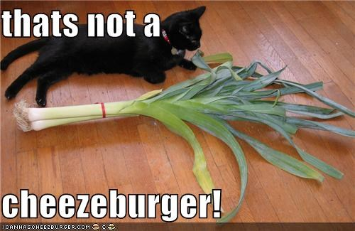 Cheezburger Image 4240258304