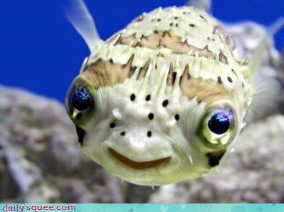 Puffer Fish smile fish underwater bad rap shy squee categoryimage