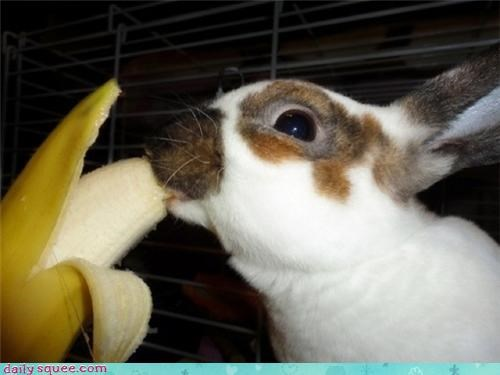 banana,bunny,happy bunday,nom nom,rabbit
