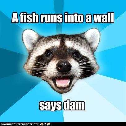 animemes dam fish Lame Pun Coon Memes wall - 4240588544
