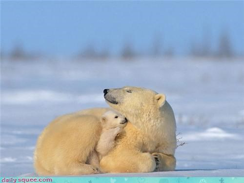 baby,snow,bears,polar bear,mommy,squee