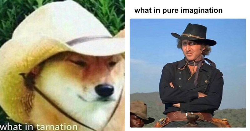 Best of 2017 what in tarnation memes, cowboy hats, birds, animals, snoop dogg.