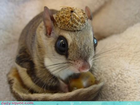 chipmunk acorn hat fashion noms whiskers ears squee categoryimage - 4240665856