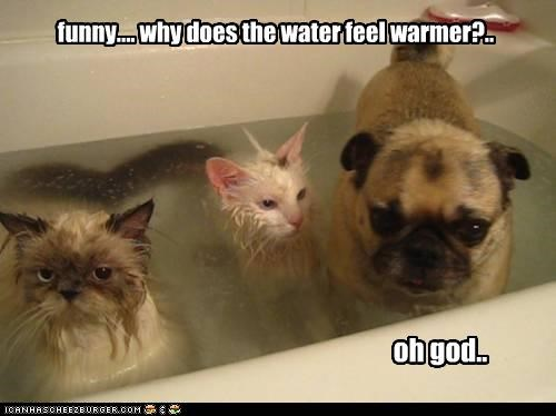 accident bath bathing cat Cats confused pug question realization water - 4240712704