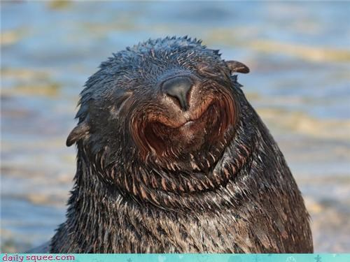 smiling seal squee sleeping - 4240795648