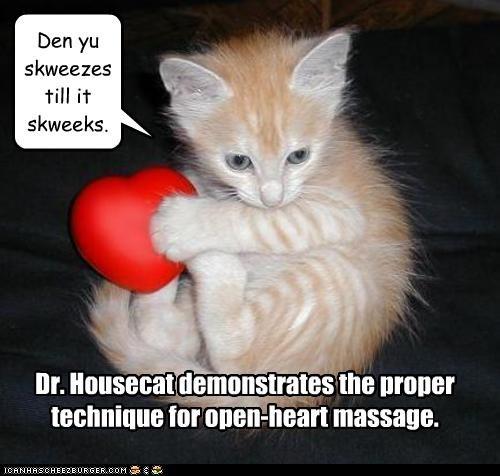Dr. Housecat demonstrates the proper technique for open-heart massage. Den yu skweezes till it skweeks.