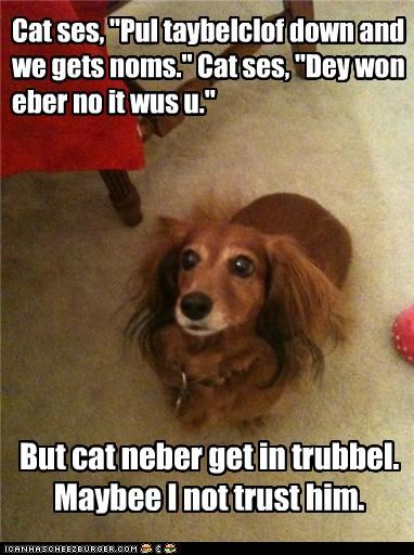 afraid,cat,concerned,confused,dachshund,distrust,ideas,saying,setup,worried