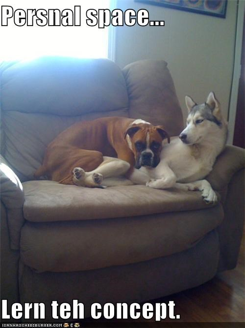 boxer concept couch cramped cuddling dislike do not want husky invasive learn personal space suggestion - 4242665984