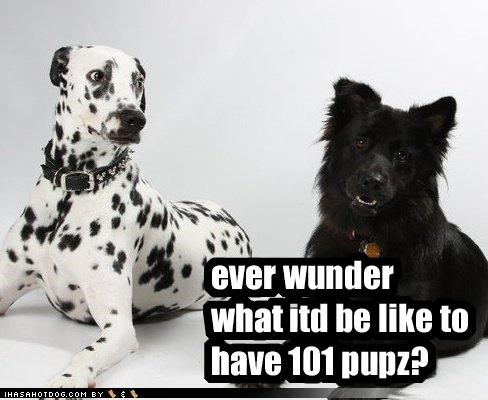 101 afraid dalmation funny face pups question theoretical whatbreed - 4242669568