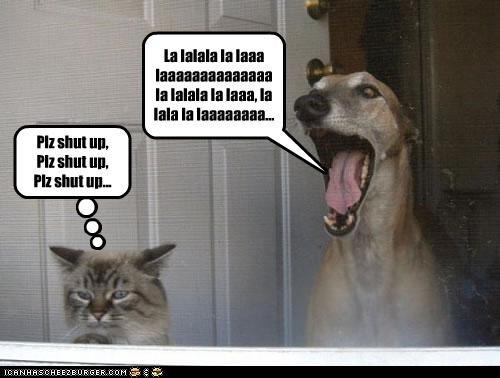 annoying bothering cat please shut up singing upset whippet - 4242965248