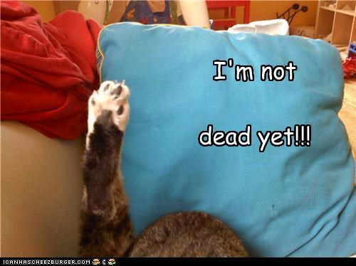 caption captioned dead exclamation famous monty python not paw phrase protesting yet - 4243045888