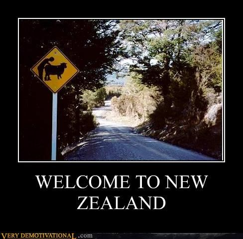 animals implied horse love new zealand peter jackson Rule 34 sheep are attractive signs - 4243060736