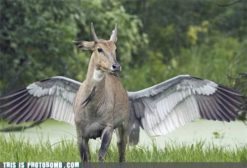 animals jk lol mythical creature pegasus perfect placement photobomb - 4243143680