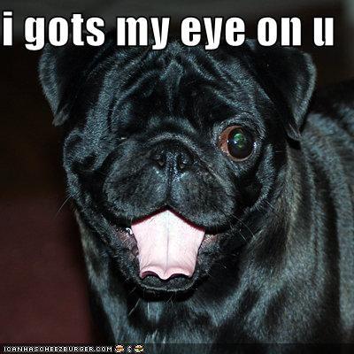 derp emphasis eye pug silly silly face singular statement watching winking - 4243211264