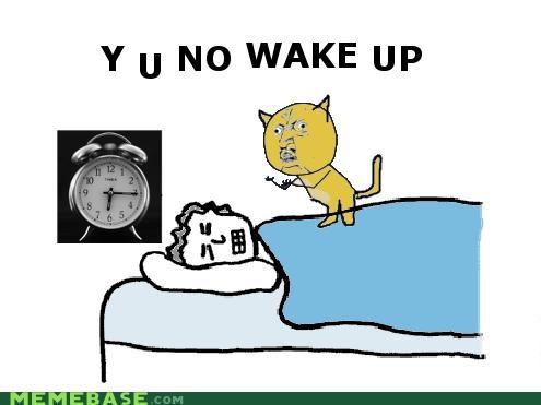 animemes cat Memes wake up Y U No Guy - 4243227136