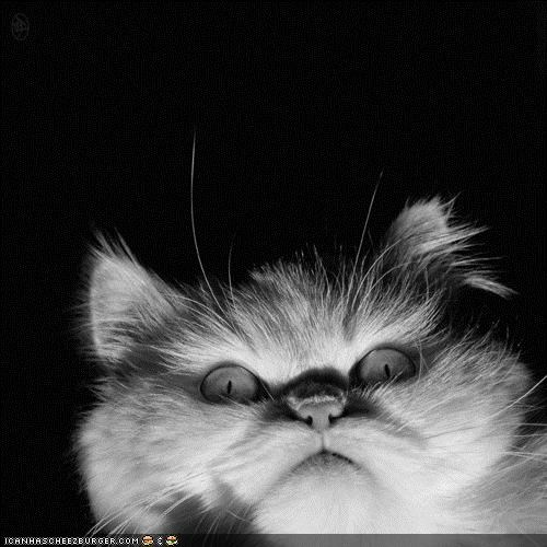 black and white,cyoot kitteh of teh day,lighting,scary