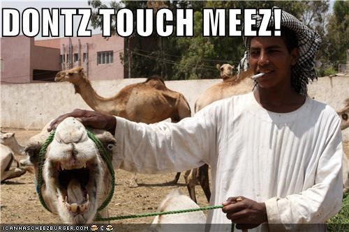 camel,critters,dont-touch-me,pets,rope