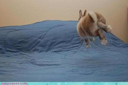 bed bunny happy bunday hop hover bunny rabbit - 4243575552