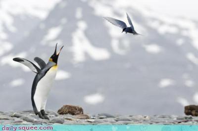 acting like animals bird fight fighting penguin pun threat threatening threats upset - 4243785216