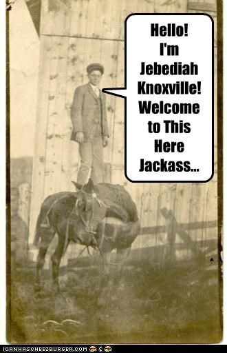 animals funny horse jackass Photo photograph TV