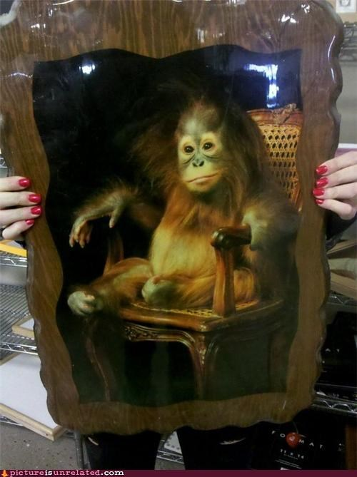 anthropomorphic,ape,celeb,cute,frame,picture,wtf