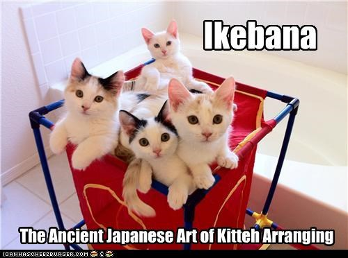 ancient arranging art caption captioned cat definition ikebana japanese kitteh kitten - 4245380864